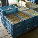 Geplukte kruisbessen in bakjes bij Fruitteeltbedrijf De Ring in Oud-Sabbinge