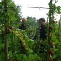 Harald Oltheten van Fruitteeltbedrijf De Ring in Oud-Sabbinge geeft uitleg